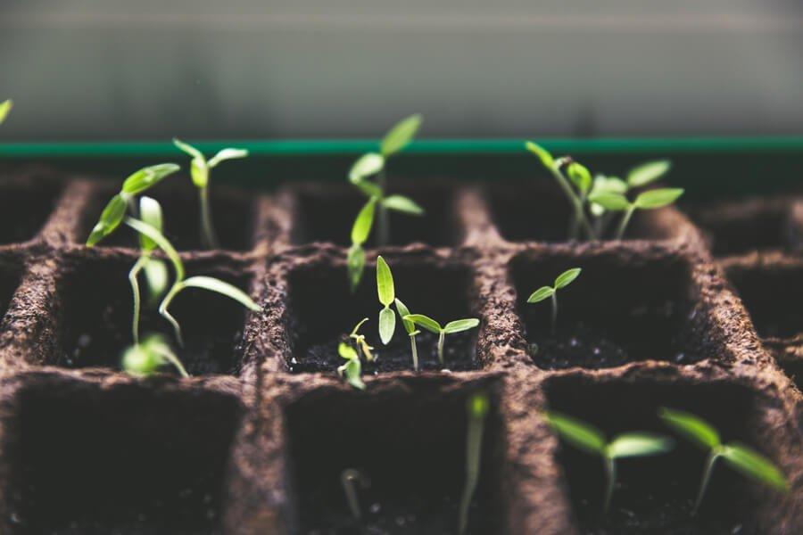 3 Things You'll Need to Grow Spiritually